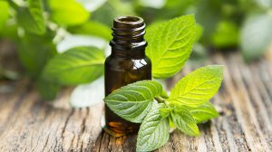 Immune Boosting Essential Oils for Fall- Peppermint Oil